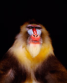 PRM 04 RK0029 05