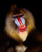 PRM 04 RK0029 21