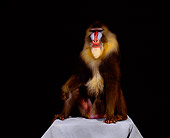 PRM 04 RK0031 02