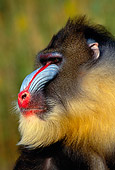 PRM 04 RK0037 37