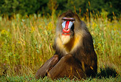 PRM 04 RK0042 02