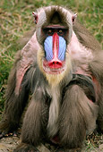 PRM 04 RK0052 07