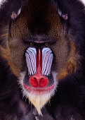 PRM 04 RK0062 09