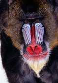 PRM 04 RK0062 12