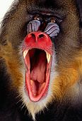 PRM 04 RK0064 07
