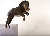 PRM 04 RK0067 01