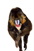 PRM 04 RK0075 01