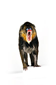 PRM 04 RK0080 01