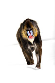 PRM 04 RK0081 01