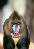 PRM 04 TL0001 01