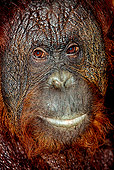 PRM 05 GL0001 01