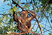 PRM 05 GL0002 01