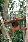 PRM 05 GL0006 01