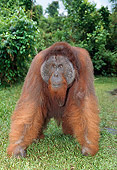 PRM 05 GL0007 01