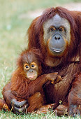 PRM 05 GL0018 01
