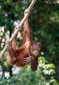 PRM 05 MH0007 01