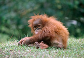 PRM 05 GR0012 01