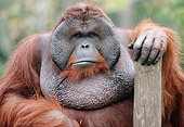 PRM 05 GR0017 01