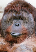PRM 05 GR0018 01