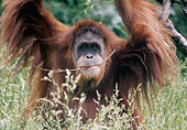 PRM 05 GR0019 01