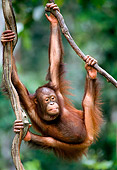 PRM 05 NE0001 01