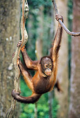 PRM 05 NE0004 01