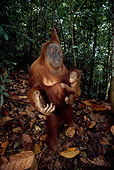 PRM 05 RF0018 01