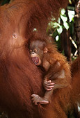 PRM 05 RF0019 01