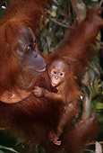 PRM 05 RF0020 01