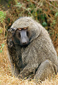 PRM 06 GL0003 01