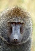 PRM 06 GL0006 01