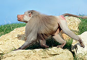 PRM 06 GL0007 01