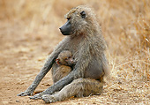 PRM 06 GL0010 01