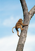 PRM 06 GL0011 01