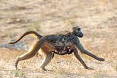 PRM 06 KH0001 01