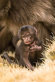 PRM 06 MC0002 01