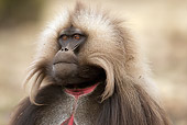 PRM 06 MC0007 01