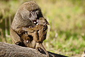 PRM 06 MC0013 01