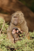 PRM 06 MC0016 01