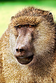 PRM 06 MH0004 01