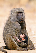 PRM 06 MH0012 01