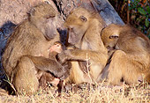 PRM 06 MH0014 01