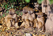 PRM 06 MH0015 01