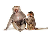 PRM 06 RK0028 24
