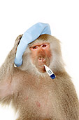 PRM 06 RK0072 01