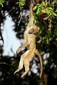 PRM 06 WF0004 01