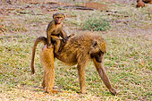 PRM 06 NE0001 01