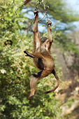 PRM 06 NE0002 01
