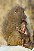 PRM 06 NE0005 01
