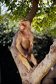 PRM 06 RK0022 07